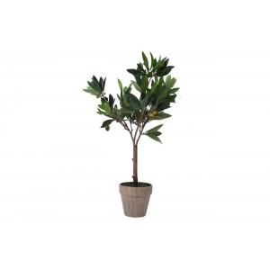 Дерево оливы в горшке 317002770