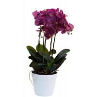 Орхидея темно-розовая в горшке 29BJ-JF218