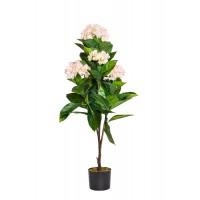 Гортензия бело-розовая в горшке 29BJ-919-63