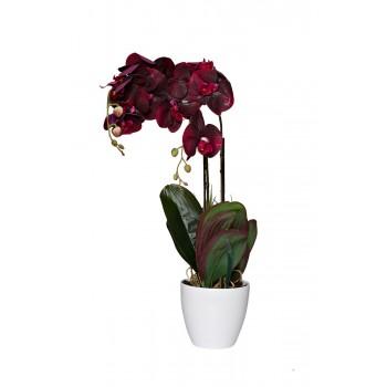 Орхидея бордовая в горшке 29BJ-170-12