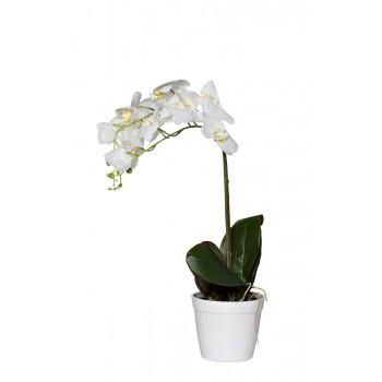 Орхидея белая в горшке 29BJ-170-13