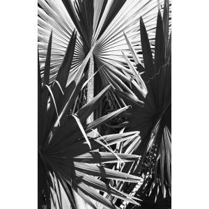 "Постер ""Пальмы"" 54STR-PALM2"